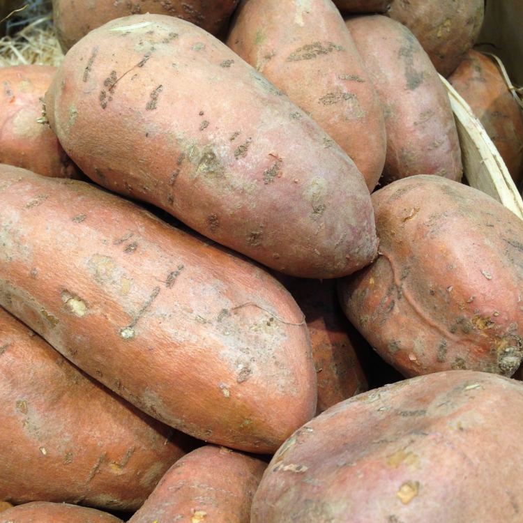 Batate (Süßkartoffel)